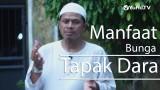 Ceramah Singkat : Manfaat Bunga Tapak Dara – Sinshe Abu Muhammad Faris Al Qiyanji